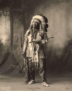 native american horse - Google Search
