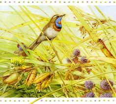 Lovely Bird Illustrations by Marjolein Bastin | Showcase of Art & Design