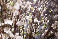 love these branches with tiny white flowers Tiny White Flowers, First Dance, Mocha, Branches, Celebrity Style, Wedding Decorations, Glamour, Celebrities, Celebs
