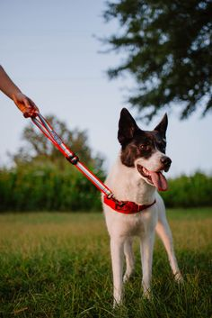 Train System, Aggressive Dog, Training Your Dog, Fur Babies, Pup, Walking, Base, Ring, Dogs