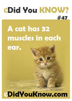 A cat has 32 muscles in each ear. ► Click here for more: eDidYouKnow.com