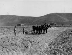 Street being grading powered by horses in Woodland Hills, circa early 1900s. Calabasas Historical Society. San Fernando Valley History Digital Library.