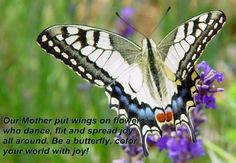 Butterfly Beatitudes