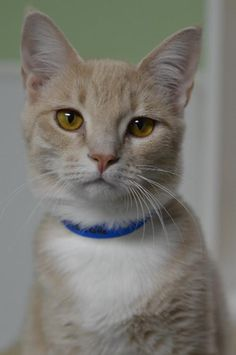 Furkids rescues hundreds of homeless cats each year, including many kittens, that are in need of caring, lifelong homes. Most of our cats are listed online and some can be visited at our PetSmart and Petco adoption centers.