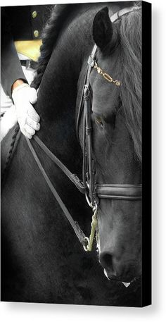 majestic black Friesian horse dressage show performace Andalusian Print by : Fran J Scott All The Pretty Horses, Beautiful Horses, Animals Beautiful, Beautiful Creatures, Dressage Horses, Friesian Horse, Andalusian Horse, Draft Horses, Arabian Horses