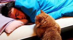 10 Reasons Why Cats Make The Best Alarm Clocks Ever - World's largest collection of cat memes and other animals Funny Cats, Funny Animals, Cute Animals, Crazy Cat Lady, Crazy Cats, Best Alarm, Cat People, All About Cats, Animation