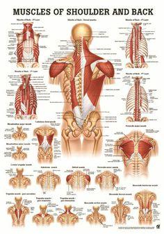 Shoulder Back Más