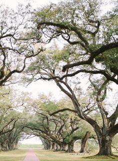 stretching trees...what a walking trail, all you have to do is decide what you want to dream while you walk.