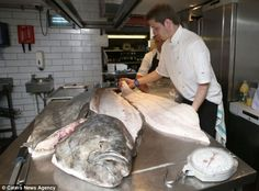 Monster: The enormous halibut, caught off the Shetland coast, is believed to be about 50 years old Halibut Fishing, 11 Stone, Seafood Restaurant, Whale Watching, Revolution, Coast, Outdoors, Camping, Foods