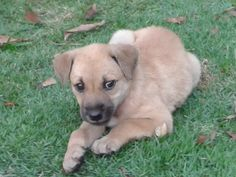 Dogs for Adoption, Sale, Lost and Found, All Ages - PetFinder.my