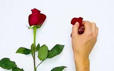 Ki ne dobjuk: Készítsünk a rózsaszirmokból tökéletes arcmaszkot! - Blikk Rúzs