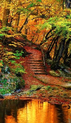 Autumn woods' orange leaf staircase to the quiet pool of the lake.. Please like, repin or follow us on Pinterest to have more interesting things. Thanks. http://hoianfoodtour.com/