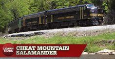 Mountain Rail Adventure in VA