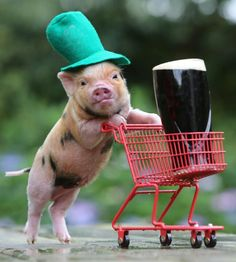 Shopping piglet... too cute..