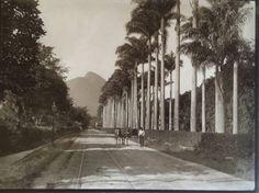 Jardim Botânico - rua Jardim Botânico