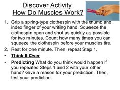 muscular system activities - Google Search
