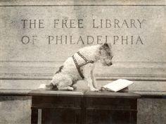 """Rodilla-Hi, la mascota de la Biblioteca Libre """"lee"""" fuera del edificio de la Biblioteca Principal, 22 de abril 1938"""