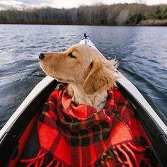 Собачка - путешественница. #dog