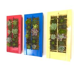 CUSTOM COLOR: Succulent Shutter Vertical Garden by LoliviaGifts