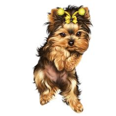 Super Cute Puppies, Cute Dogs And Puppies, Cute Girl Drawing, Cute Drawings, Christmas Pictures To Draw, Yorky Terrier, Puppy Crafts, Yorkie Clothes, Teacup Yorkie