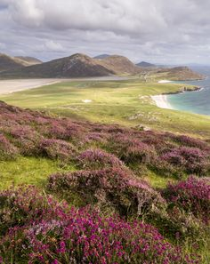 Isle of Harris, Outer Hebrides, Scotland by John Cropper......and beautiful heather!