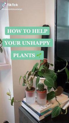 Indoor Garden, Garden Plants, Indoor Plants, House Plants Decor, Plant Decor, Household Plants, Growing Plants Indoors, Plant Projects, Decoration Plante