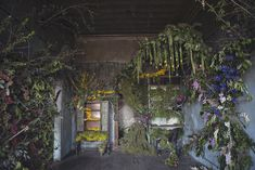 In a small town just north of Detroit, Lisa Waud is breathing life (and death and life again) into an abandoned home where she opened her flower shop Pot & Box.  With the help of Reclaim Detroit (who is salvaging and recycling most of the materials from the house itself), she intends to build a small farm–Flower House Farm–which will eventually supply her shop Pot & Box.