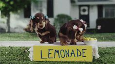 Why You Should Never Own A Dachshund #Dachshund #Dogs