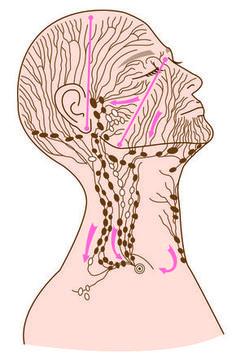 薄毛・白髪・うねり髪対策:頭皮血流アップのマッサージポイント | 余慶尚美オフィシャルブログ「美巡ライフスタイル」Powered by Ameba