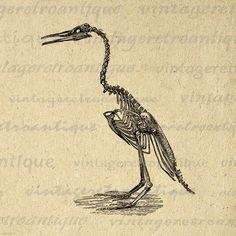 Bird Skeleton Image Graphic Printable by VintageRetroAntique