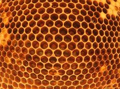 Beehive | Mesindus | Ingo Valgma | Flickr Beehive, Honey, Bee Skep