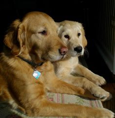 Isaiah Comfort Dog with his mom! #k9comfortdogs #dogs
