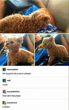 Cat Memes Of The Day 32 Pics – - Lovely Animals World Cat has human trained 35 Purrrrfect Cat Memes For Your Caturday Enjoyment - Memebase - Funny Memes Join our group: Happy Cats Thurs. Funny Animal Memes, Cute Funny Animals, Cute Baby Animals, Cute Cats, Funny Animal Photos, Animal Jokes, Adorable Kittens, Dog Memes, Funny Shit
