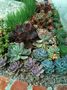 Pacific Succulents Designs And Installs Custom Succulents Containers And  Gardens In The West Los Angeles Area.
