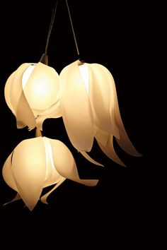 Tulip-shaped pendant lights