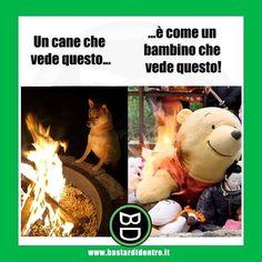Non e mai bello vedere i propri #giocattoli che bruciano! #bastardidentro #cane #ipnoticamentebastardidentro www.bastardidentro.it