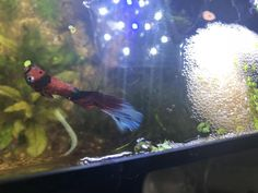 He loves building his bubble nests.