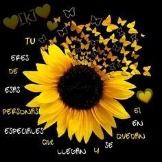 Cute Flower Wallpapers, Sunflower Clipart, Sunflower Pictures, Sunflower Wallpaper, Sunflower Fields, Water Slides, Cellphone Wallpaper, Clip Art, Drawings