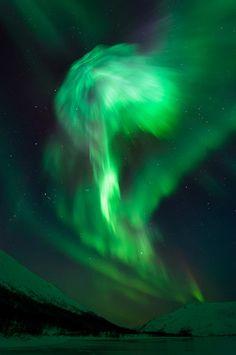 Aurora mushroom - Norway