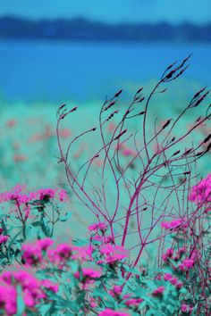 Teal and pink beautiful