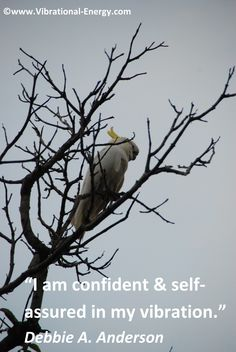 Inspirational words about confidence.