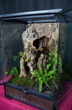 Hottest Screen tarantula enclosure Style Acceptable, so we all know crawlers have poor press. A media channels is obviously portray spiders outside to be unheal Gecko Habitat, Reptile Habitat, Reptile House, Reptile Room, Reptile Cage, Gecko Terrarium, Reptile Terrarium, Tarantula Enclosure, Reptile Enclosure