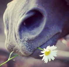 With a daisy Most Beautiful Animals, Beautiful Horses, Horse Feed, Antler Art, Horse World, Horse Photography, Photography Ideas, Horse Photos, Animal Kingdom