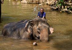Thajsko - koupání slonů