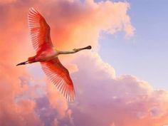 flight towards pink clouds