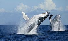 Punta Mita is an excellent location for those looking to view migrating whales.