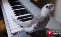 This bird sings in a duet that could charm anyone!
