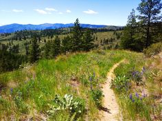Echo Ridge trail near Lake Chelan - Desert Dog Designs photo