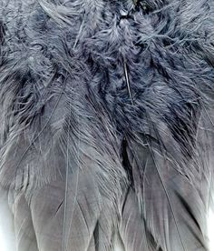 **Feather Texture: