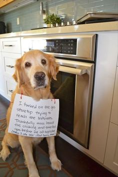 A Funny Dog Shaming